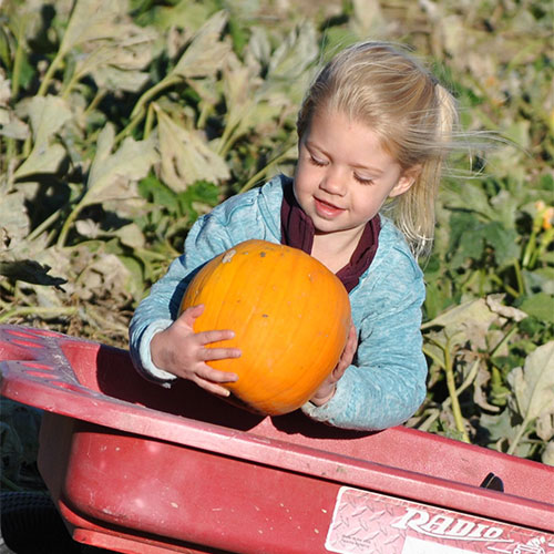 Walters Farm Pumpkin Patch And Corn Maze Burns Ks Near Wichita