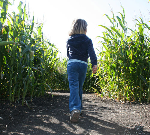 Start a new family tradition this fall with The Walters' Farm Corn Maze and Pumpkin Patch in El Dorado, near Wichita, Kansas.